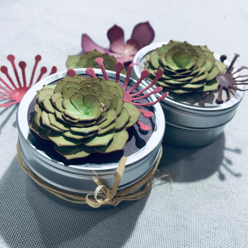 atelier-creatif-adulte-diy-succulente